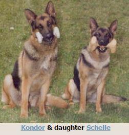 Hinterland German Shepherds In Angels Camp Ca 2